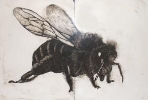 Bee-FINAL