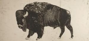 Buffalo-1-FINAL
