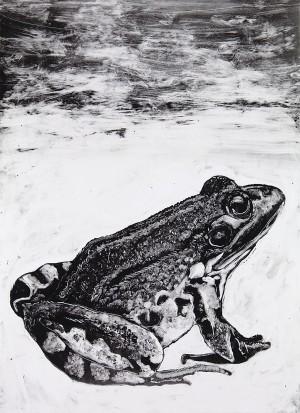 Frog-FINAL