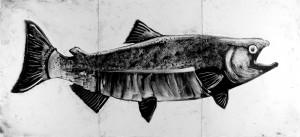 Salmon-1-bw-FINAL