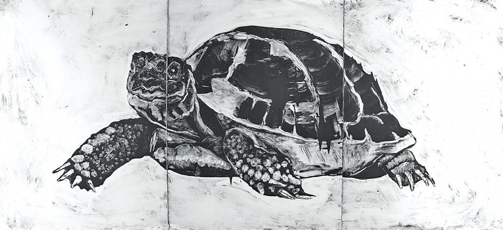 Turtle-FINAL