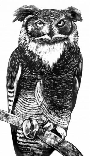 Owl-2-full-2