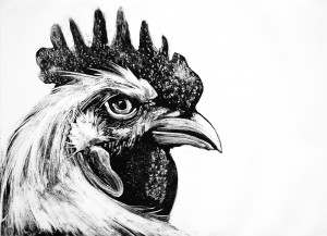 Rooster-head