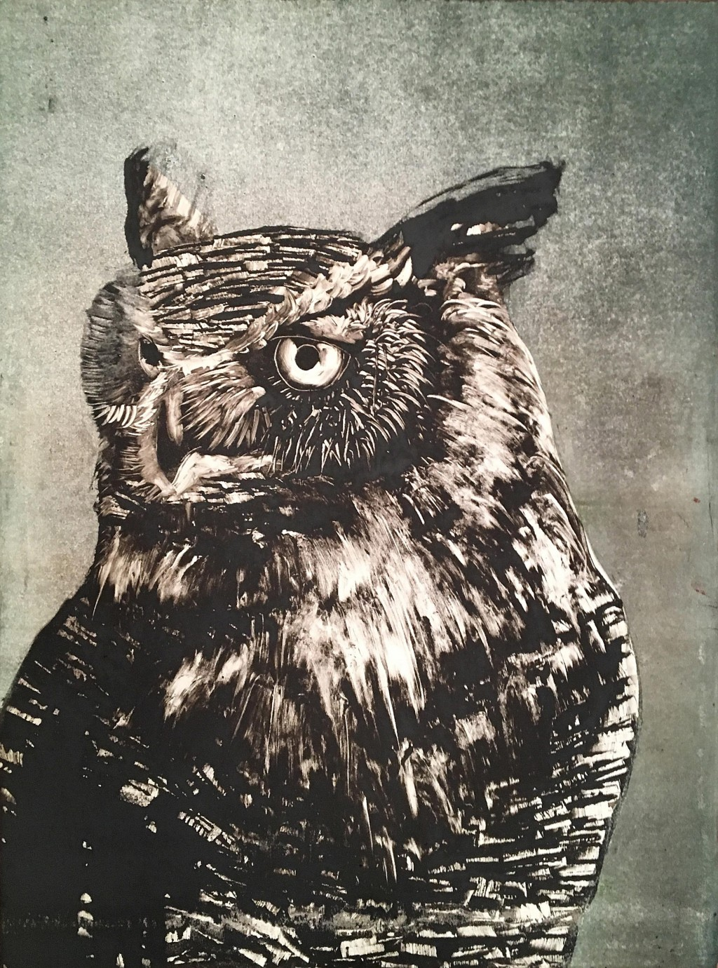 Owl-with-green-background